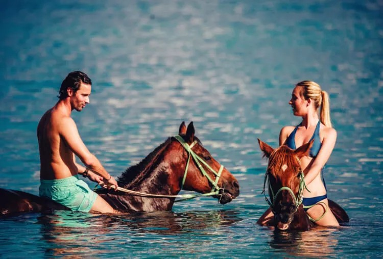 Swim With The Horse