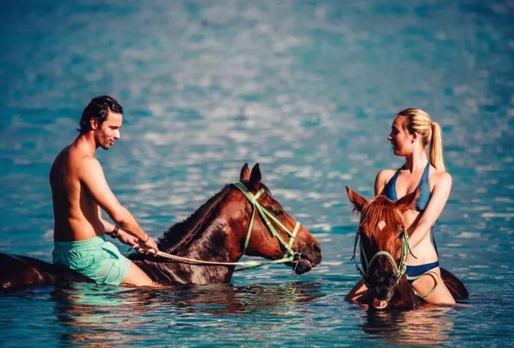 Swim With The Horse